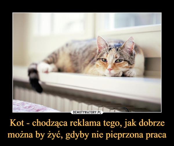 Kot - chodząca reklama tego, jak dobrze można by żyć, gdyby nie pieprzona praca –