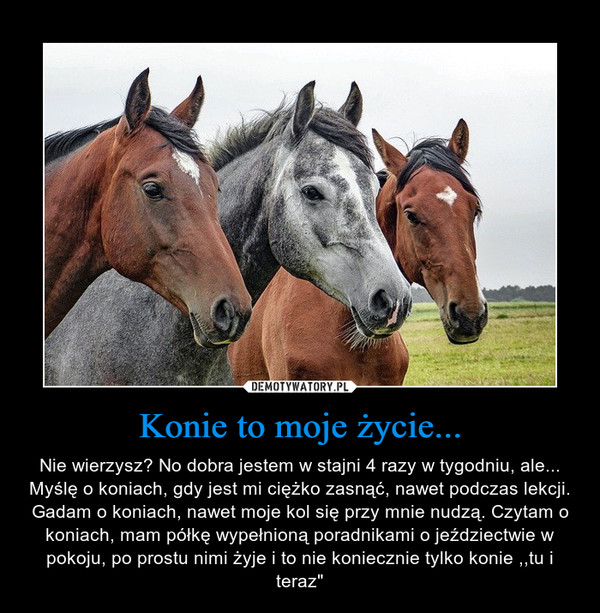 """Konie to moje życie... – Nie wierzysz? No dobra jestem w stajni 4 razy w tygodniu, ale...Myślę o koniach, gdy jest mi ciężko zasnąć, nawet podczas lekcji. Gadam o koniach, nawet moje kol się przy mnie nudzą. Czytam o koniach, mam półkę wypełnioną poradnikami o jeździectwie w pokoju, po prostu nimi żyje i to nie koniecznie tylko konie ,,tu i teraz"""""""
