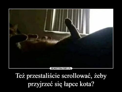 Też przestaliście scrollować, żeby przyjrzeć się łapce kota?