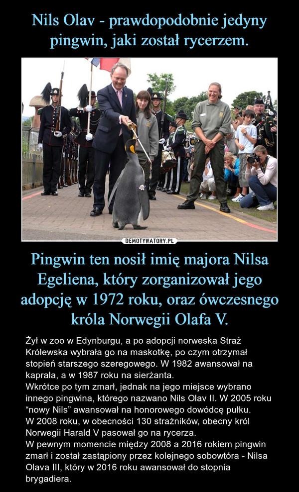 """Pingwin ten nosił imię majora Nilsa Egeliena, który zorganizował jego adopcję w 1972 roku, oraz ówczesnego króla Norwegii Olafa V. – Żył w zoo w Edynburgu, a po adopcji norweska Straż Królewska wybrała go na maskotkę, po czym otrzymał stopień starszego szeregowego. W 1982 awansował na kaprala, a w 1987 roku na sierżanta. Wkrótce po tym zmarł, jednak na jego miejsce wybrano innego pingwina, którego nazwano Nils Olav II. W 2005 roku """"nowy Nils"""" awansował na honorowego dowódcę pułku. W 2008 roku, w obecności 130 strażników, obecny król Norwegii Harald V pasował go na rycerza.W pewnym momencie między 2008 a 2016 rokiem pingwin zmarł i został zastąpiony przez kolejnego sobowtóra - Nilsa Olava III, który w 2016 roku awansował do stopnia brygadiera."""