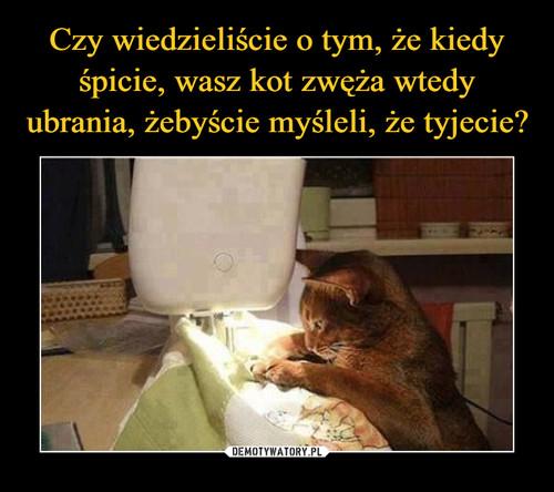 Czy wiedzieliście o tym, że kiedy śpicie, wasz kot zwęża wtedy ubrania, żebyście myśleli, że tyjecie?