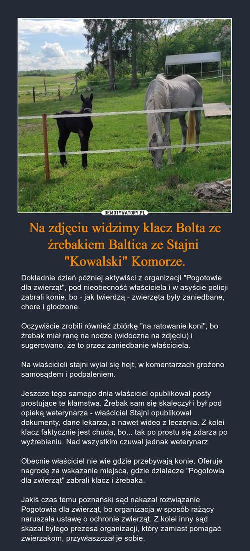 """Na zdjęciu widzimy klacz Bolta ze źrebakiem Baltica ze Stajni  """"Kowalski"""" Komorze."""