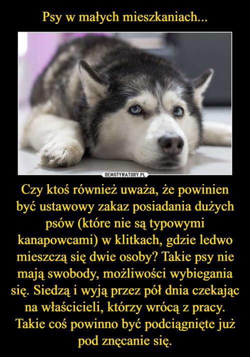 Psy w małych mieszkaniach... Czy ktoś również uważa, że powinien być ustawowy zakaz posiadania dużych psów (które nie są typowymi kanapowcami) w klitkach, gdzie ledwo mieszczą się dwie osoby? Takie psy nie mają swobody, możliwości wybiegania się. Siedzą i wyją przez pół dnia czekając na właścicieli, którzy wrócą z pracy. Takie coś powinno być podciągnięte już pod znęcanie się.