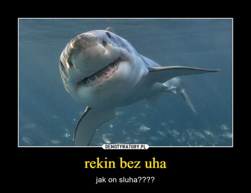 rekin bez uha