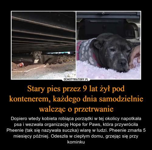 Stary pies przez 9 lat żył pod kontenerem, każdego dnia samodzielnie walcząc o przetrwanie