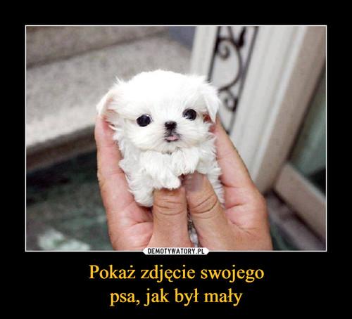 Pokaż zdjęcie swojego psa, jak był mały