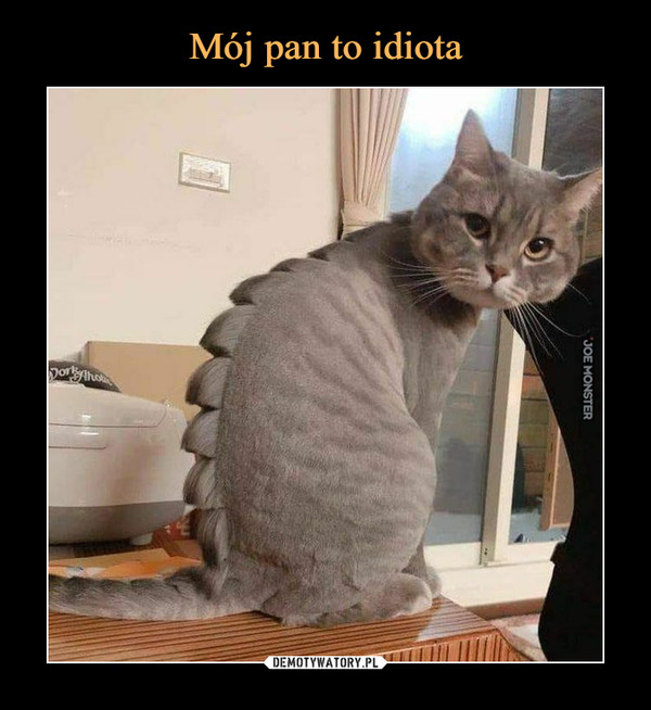 Mój pan to idiota