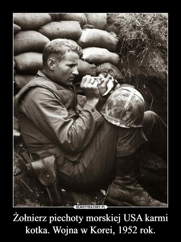 Żołnierz piechoty morskiej USA karmi kotka. Wojna w Korei, 1952 rok. –