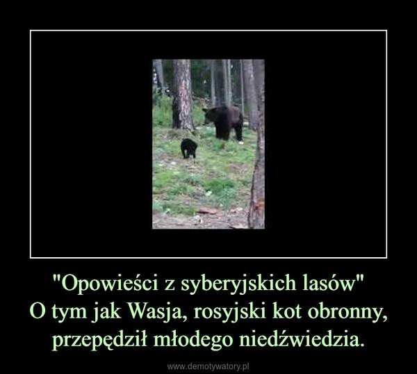 """""""Opowieści z syberyjskich lasów""""O tym jak Wasja, rosyjski kot obronny, przepędził młodego niedźwiedzia. –"""