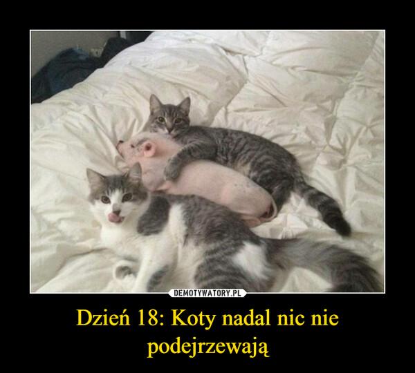 Dzień 18: Koty nadal nic nie podejrzewają –