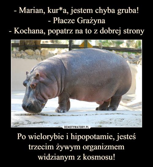 - Marian, kur*a, jestem chyba gruba! - Płacze Grażyna - Kochana, popatrz na to z dobrej strony Po wielorybie i hipopotamie, jesteś trzecim żywym organizmem widzianym z kosmosu!