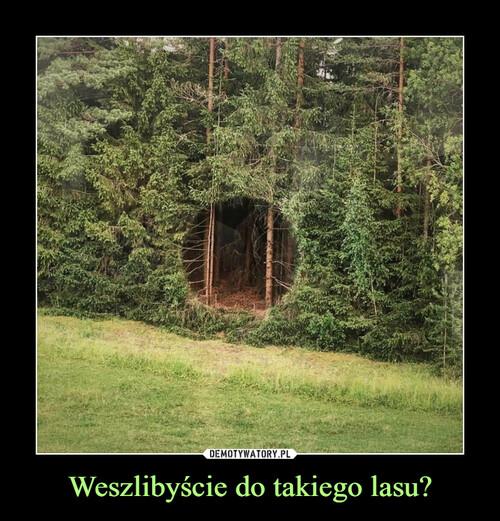 Weszlibyście do takiego lasu?